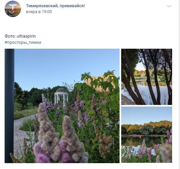 Фото дня: цветы и ротонда в парке «Дубки»