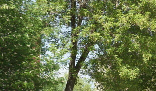 Посещение природного парка «Река Чусовая» стало платным
