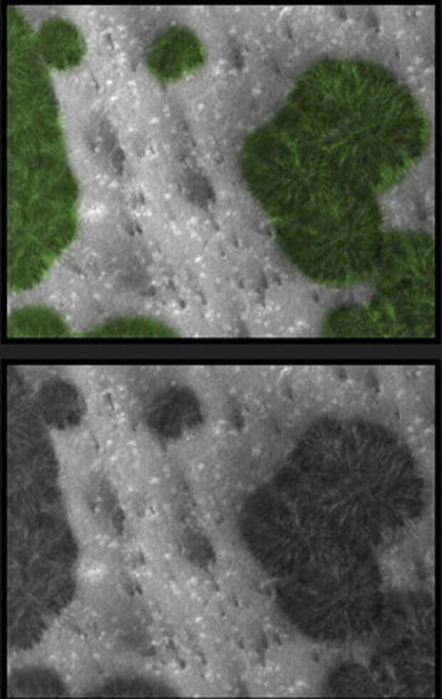 На Марсе растут деревья?