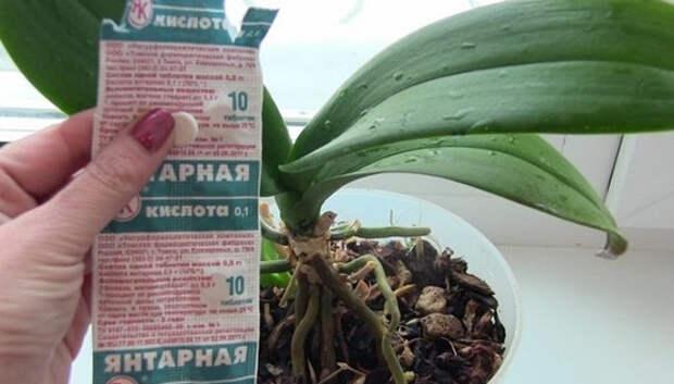 Разведите всего одну таблетку вечером и цветы будут радовать вас весь год. Уход за комнатными цветами в домашних условиях