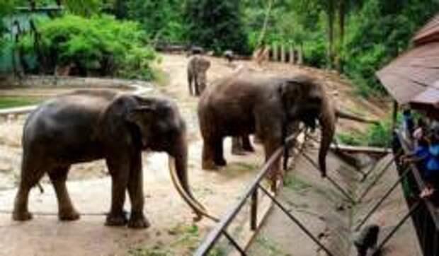 Открытый контактный зоопарк Кхао Кхео в Королевстве Таиланд
