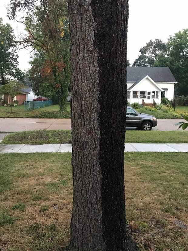 2. Дождь прошел, оставив дерево наполовину мокрым идеально, красиво, перфекционизм, фото, четко