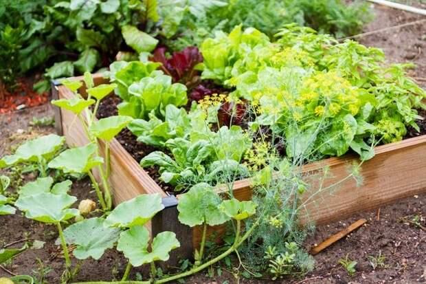 Альтернативное решение – овощной цветник