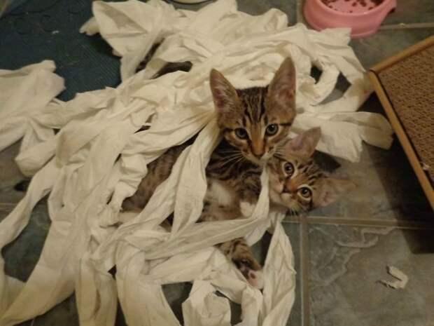 Бурная кошачья жизнь