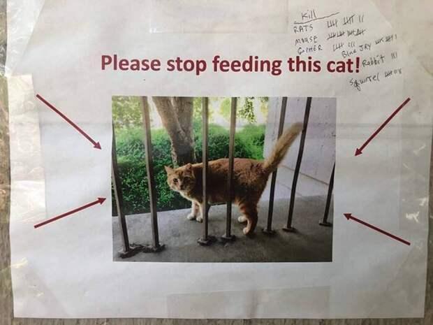 Обеспокоенные студенты-физики умоляют сокурсников перестать кормить Чито, потому что он слишком толстый животные, забавно, кот, лишний вес, смешная история, студенты, физики, юмор