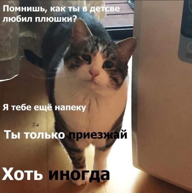 5 фотографий кошки Мами, которая стала мемом из-за самой грустной мордочки на свете