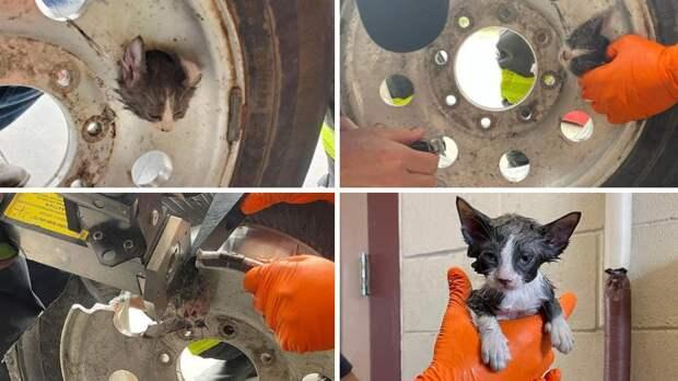 Пожарные достали из диска колеса застрявшего внутри котенка