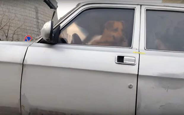 В Москве эвакуировали машину с собакой прямо от отдела ГИБДД