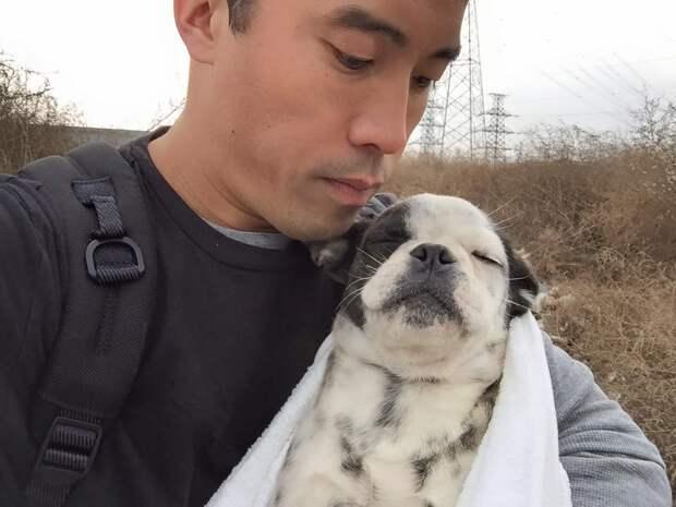 Ниндзя-хранитель! Его убивали, грабили, угрожали – но он по-прежнему проникает на закрытые объекты и спасает собак!