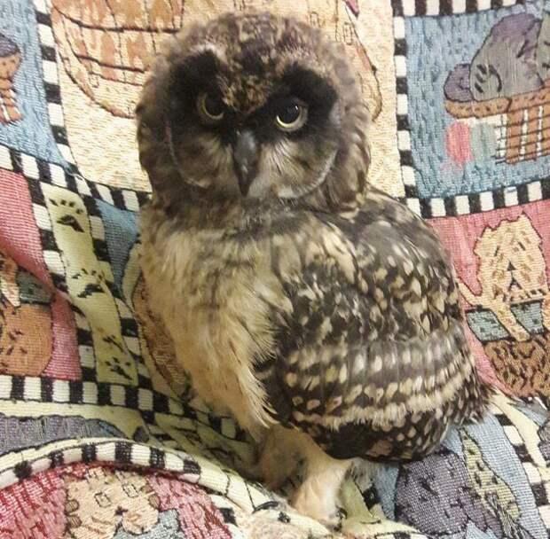 Новосибирские ветеринары спасли молодую сову, проглотившую веревку