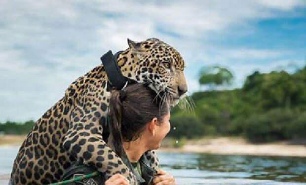 Ягуар в реке просил о помощи: солдат нырнул в течение не испугавшись хищника