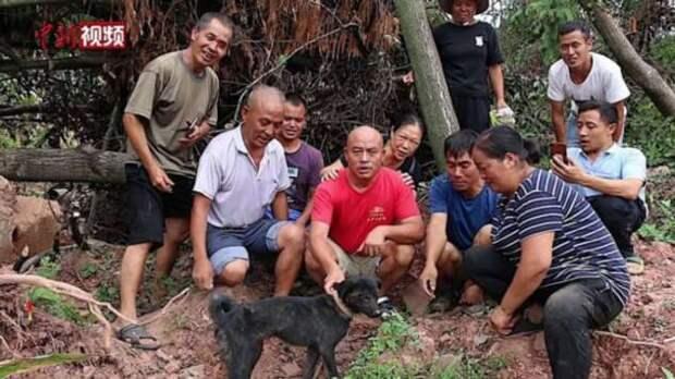 Собака чудом выжила, проведя 37 дней под руинами дома