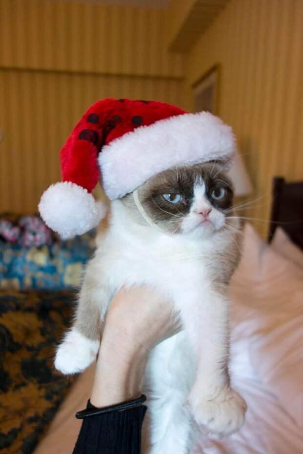 Домашние питомцы, которые категорически не рады новогодним праздникам