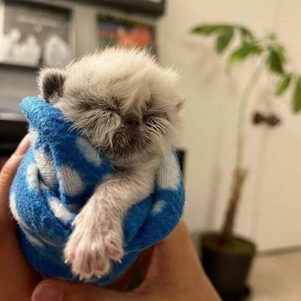 Сердца людей покорил котенок по прозвищу Дедуля