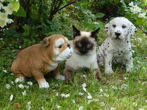 NewPix.ru - Отношения человека и кошки. Красивые фотографии кошек