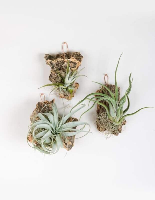 Комнатные растения, которые растут без почвы