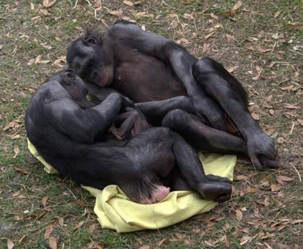 ТОП-25: Странные брачные ритуалы животных