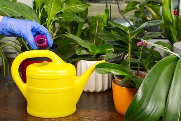 Биопрепараты для комнатных растений