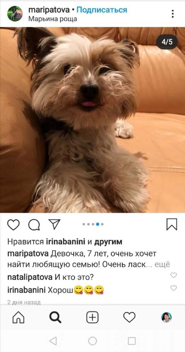 Собака терьер из Марьиной рощи