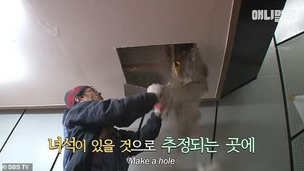 Замурованного в стене кота спасли через два года
