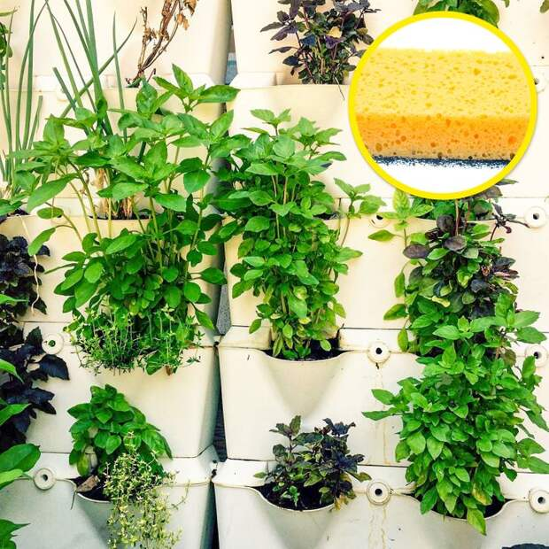 Секреты квартирных садоводов