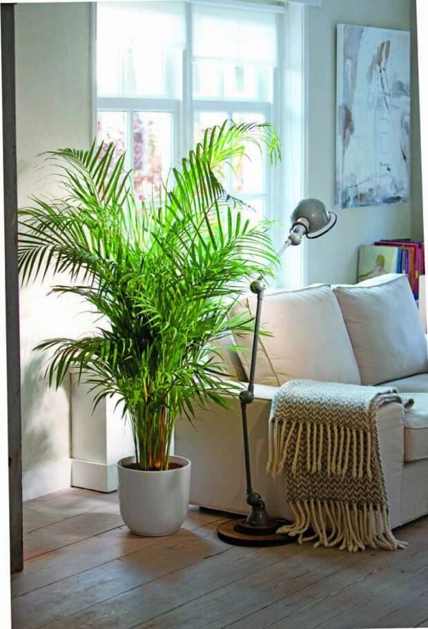 12 комнатных растений, которые очищают воздух и безопасны для кошек