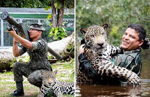 Спасённый ягуар вырос ручным, как домашний кот