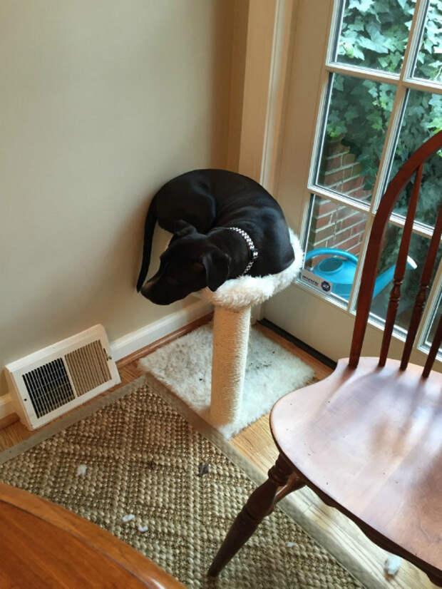 Собака на месте кошки.