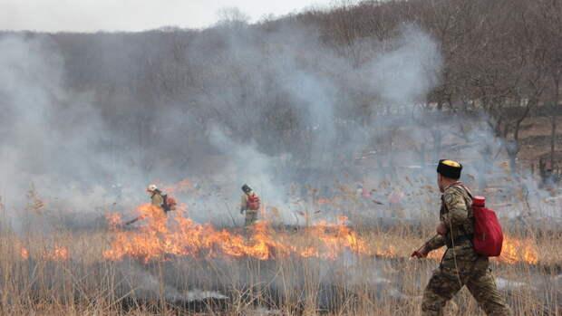Тюменские пожарные развеяли мифы о пользе сжигания сухой травы