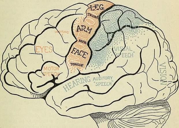 Мозговой имплантат помог воспроизвести беззвучную речь паралитика по нейронной активности