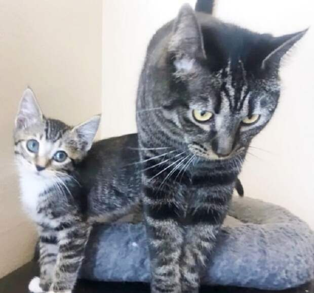 Коты стоят