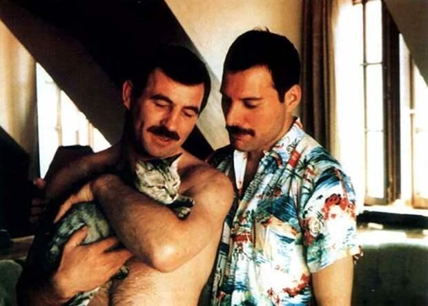 Фредди Меркьюри и его кошки, которых он очень любил и относился к ним, как к своим детям Фредди Меркьюри, домашний питомец, животные, знаменитости, кошки