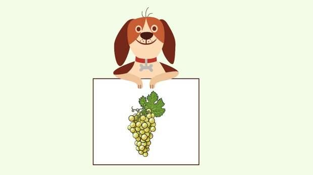Собака и виноград