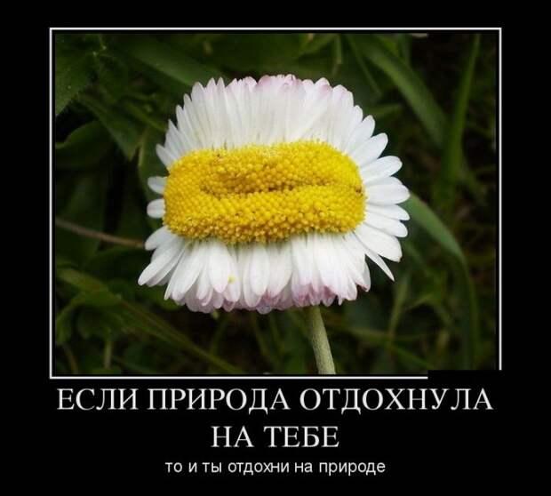 Свежие демотиваторы для позитивного настроения (11 фото)