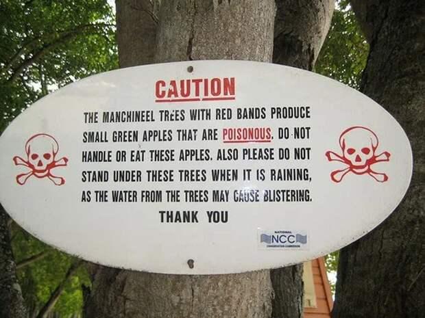 Самое опасное дерево на планете