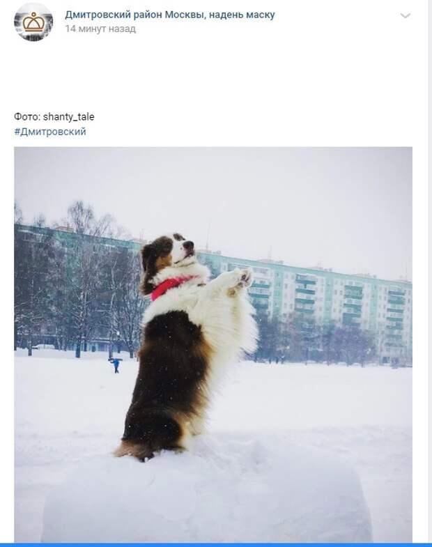 Фото дня: собачьи радости на Ангарских прудах