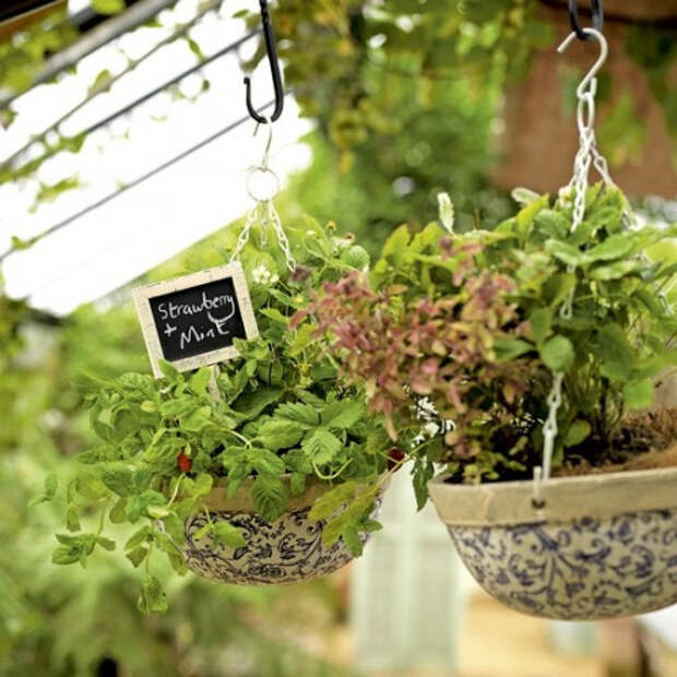 herb-garden-inspirations9-500x500 (500x500, 247Kb)