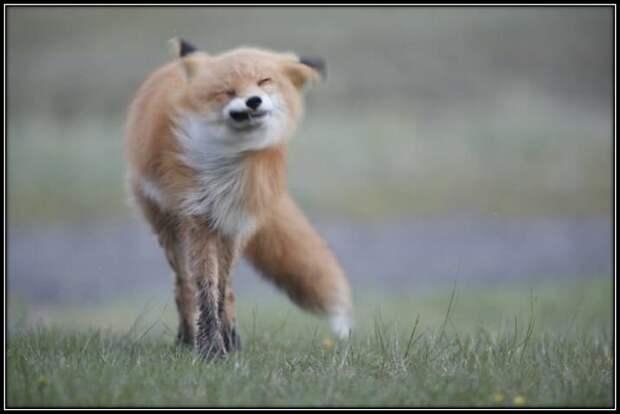 Неудачно-смешные фото животных
