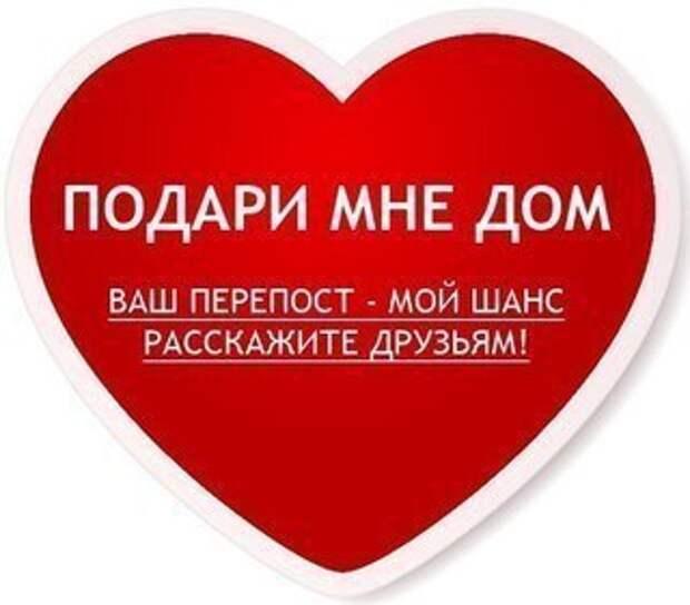 Подарите солнечным ангелочкам вашу любовь и дом! Они, как никто, в этом нуждаются!!!