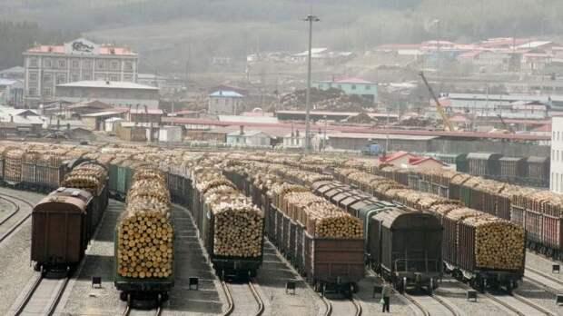 Правительство России намерено убрать Китай изэкспорта российского леса