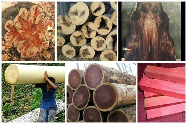 Просто о некоторых деревьях, их древесине, свойствах и фактах деревья, древесина, интересное, природа, факты