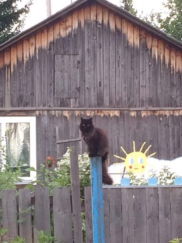 Вышел котик из-за тучи город, домашние животные, забор, кот, кошка, село, улица, эстетика