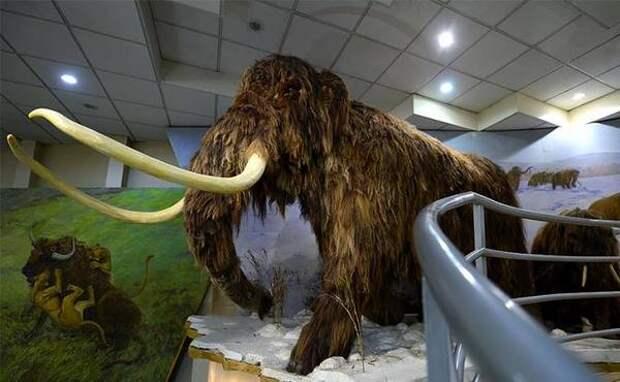 Якутские мамонты начнут гонять по тундре и оленей, и оленеводов