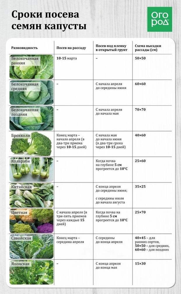 Таблица - посев