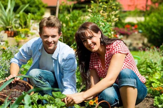 Благоприятное воздействие растений друг на друга и грамотный севооборот  позволяют увеличить урожайность