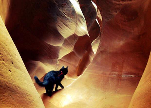 Альпинисточка моя: первый вмире котик-скалолаз