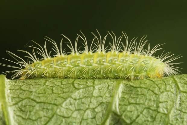 Просто кактус ползёт по своим кактусовским делам.