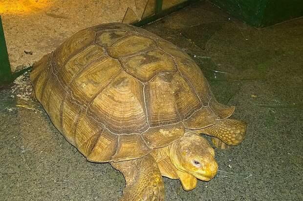 Та самая черепаха. Фото: архив героев публикации
