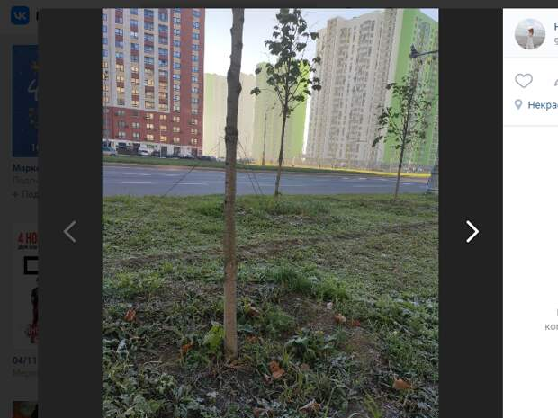 «Ловушки» на деревьях по улице Вертолетчиков вновь устранили
