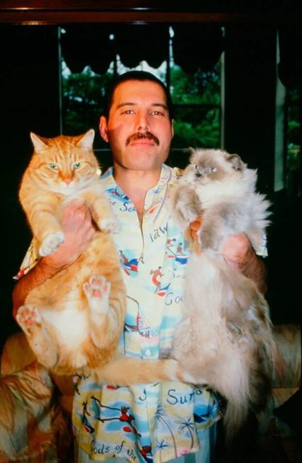 Моя прелесть: котики и собаки великих людей